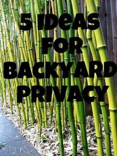 5 Ideas To Make Your Yard More Private